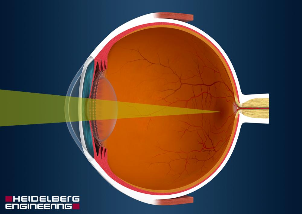 Funktion des Auges